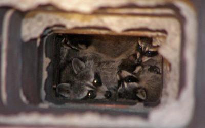 Animals Inside Chimneys