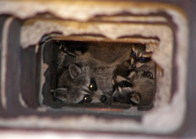 Animals Inside Chimneys